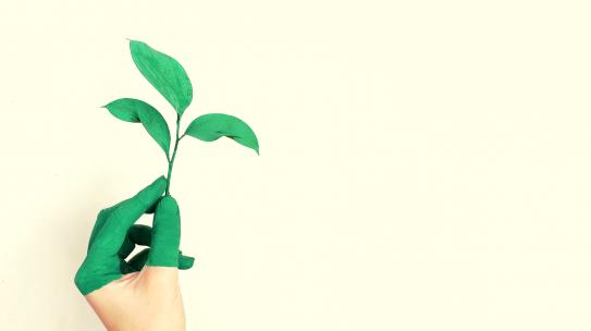 Sostenibilità aziendale: qualche esempio dal mondo