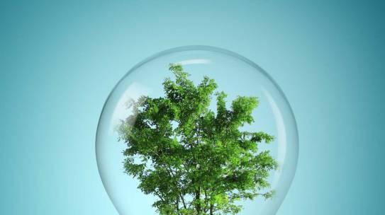 Aziende ecosostenibili: quali sono i vantaggi competitivi?